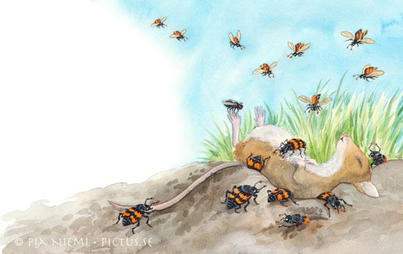 dödgrävare flyger till byte